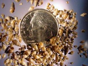 snail dime