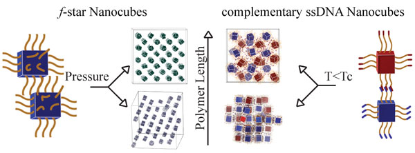 """Hairy"" polymer-coated nanocubes and DNA-coated nanocubes get in line. Image from the Ames Laboratory website."