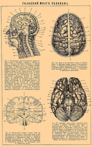A brain diagram from the Brockhaus and Efron Encyclopedic Dictionary, published in Russia,1890-1907.