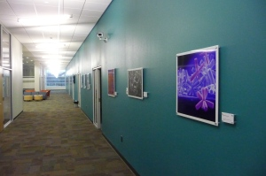 Microscope images line the hall that separates SIF offices from the control rooms, bays and service corridor.