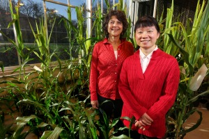 ISU researchers Eve Syrkin Wurtele and Ling Li. ISU photo by Christopher Gannon.
