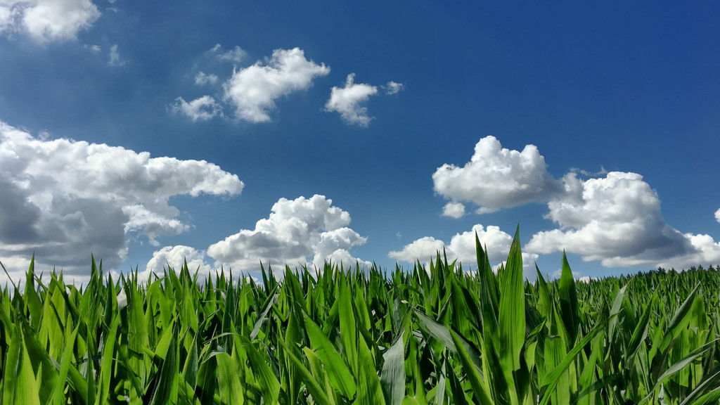 Cornfields might not understand it, but they're messing with our weather.